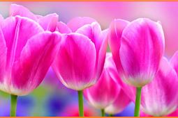 Bagian Bagian Bunga Dan Fungsinya