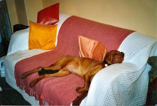 Understanding Your Dog's Unique Needs