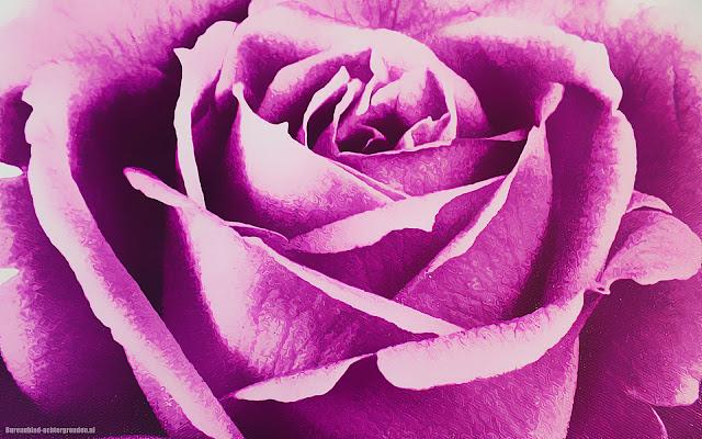 Close up foto van een grote geschilderde paarse bloem