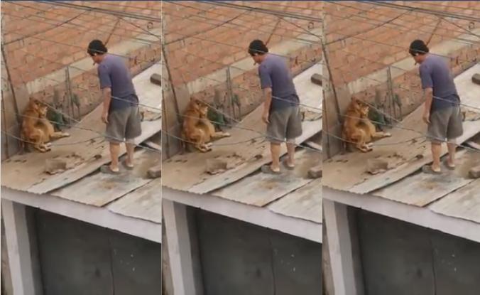 SJL: Sujeto es captado golpeando salvajemente a sus perros con un palo| VÍDEO