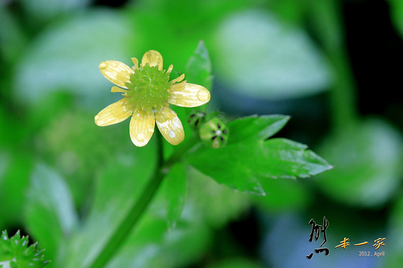 三峽賞螢下午茶|珍園|螢火蟲花園