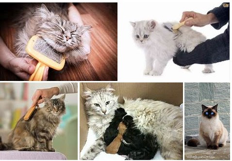 Seven Ways To Take Care Of The Long Haired Cat