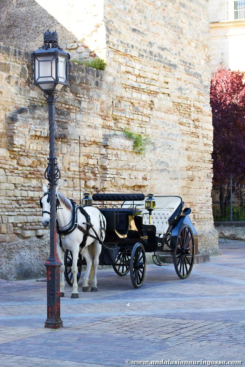 Jerez Alcazar 1