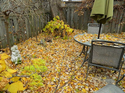 Monarch Park Toronto Fall Cleanup Before by Paul Jung Gardening Services--a Toronto Gardening Services Company