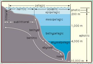 k turunnya permukaan air bahari secara terpola  Kabar Terbaru- PENGARUH PASANG SURUT AIR LAUT TERHADAP EKOSISTEM INTERTIDAL