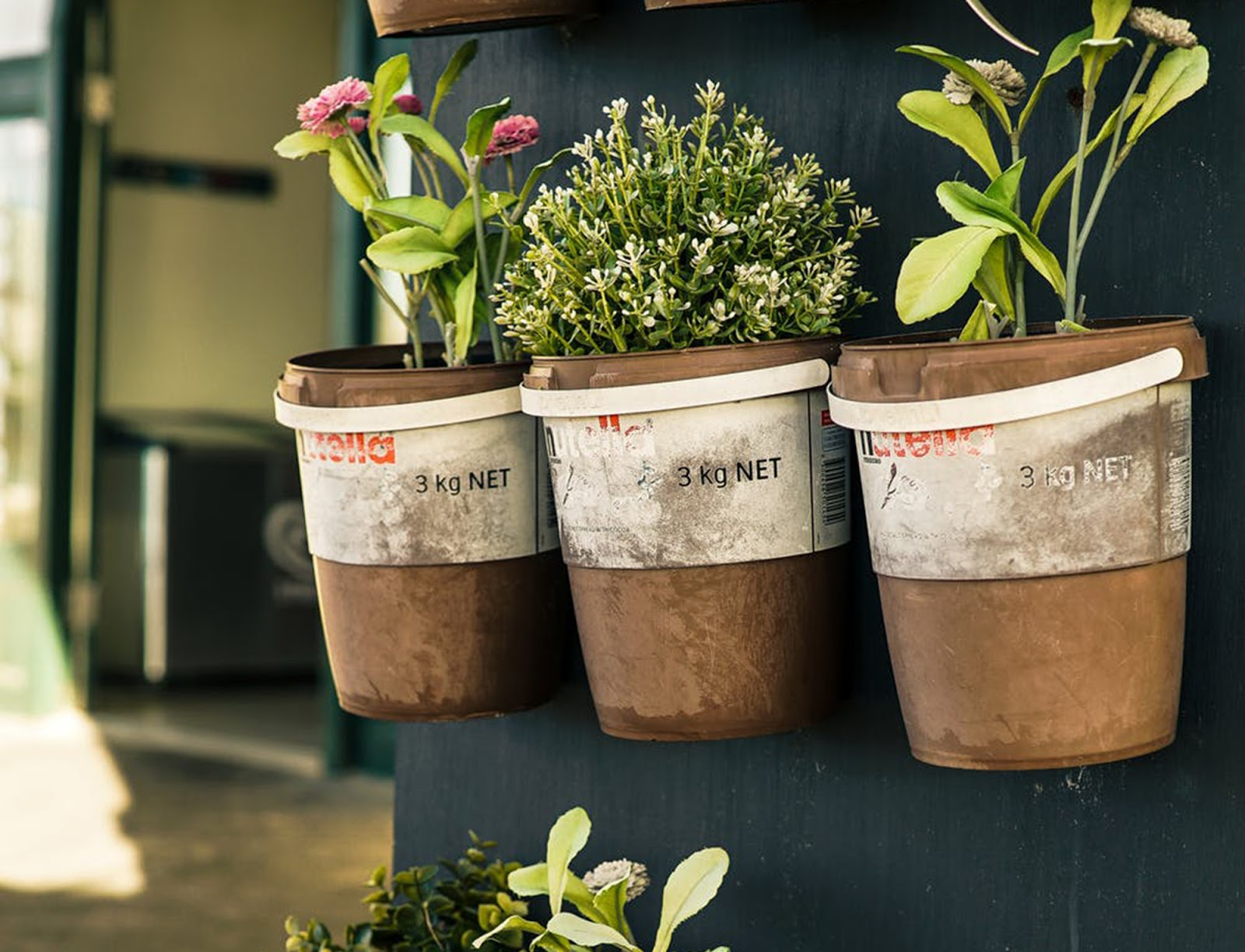 Glorious Gardening: Why I Love Growing Plants From Seeds