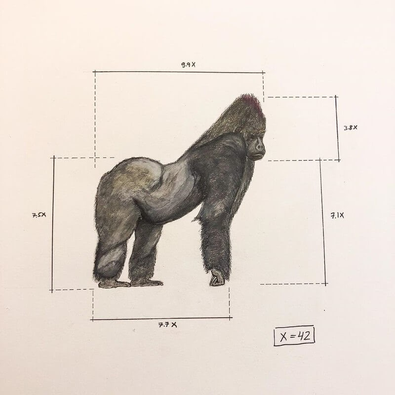 01-Mountain-Gorilla-Ran-Shapira-Animal-Drawings-from-a-Sculptor-s-Perspective-www-designstack-co
