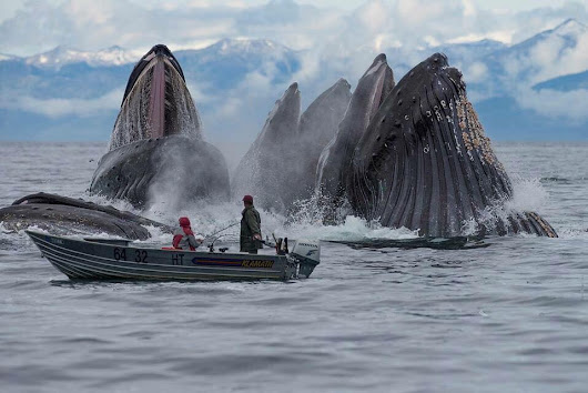 Amazing Photo Of Giant Whales Feeding So Close To The Small Boat