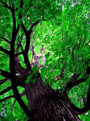 relaks minda hijau alam