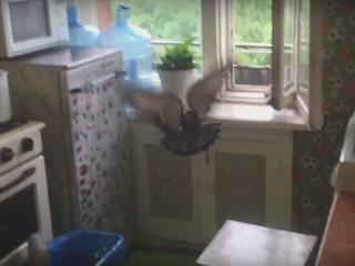 Залетел через окно голубь