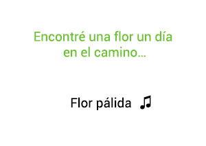 Marc Anthony Flor Pálida significado de la canción.