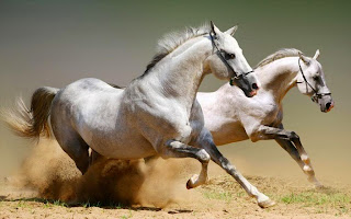 pictures of horse hd