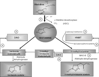 Histamine intolerance is related to hives, vertigo, allergies