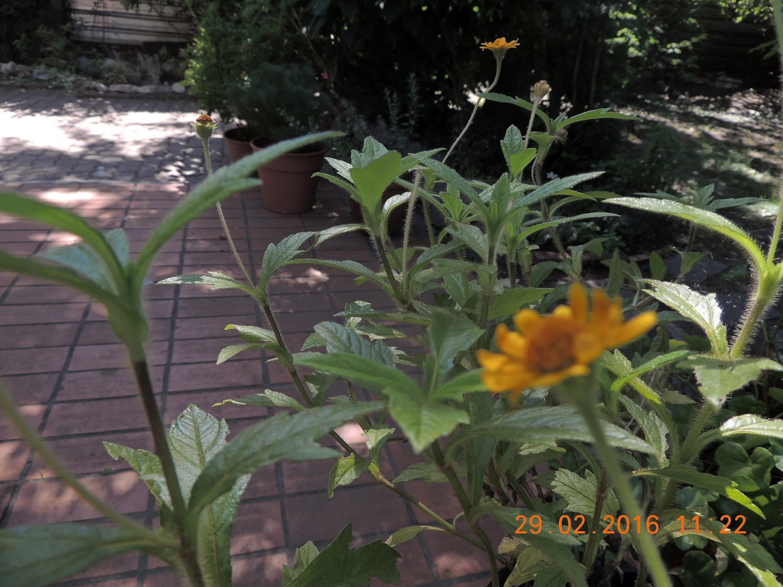Mi querido jard n adi s febrero for Adios jardin querido