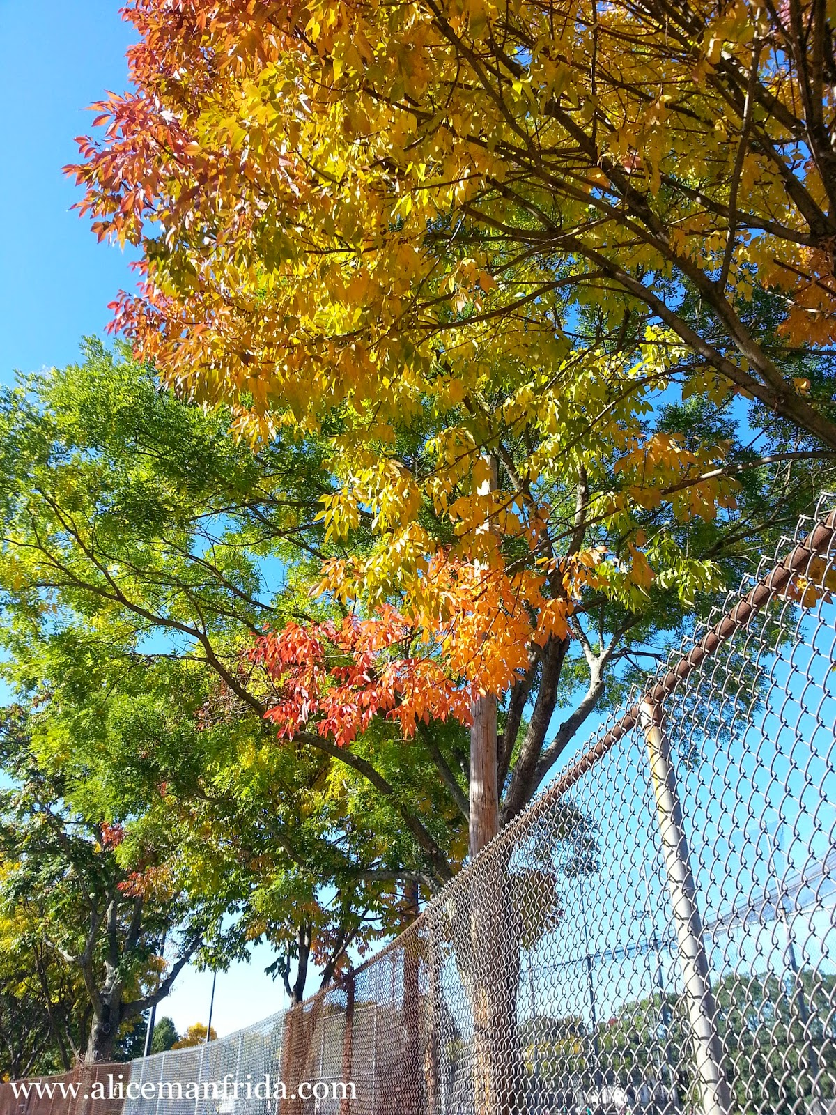www.alicemanfrida.com, autumn, leaves, colored leaves