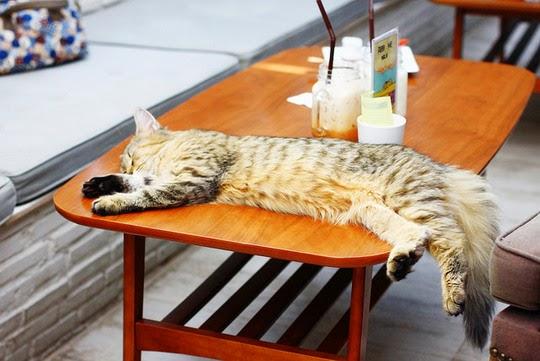 Bangkok Thailand Purr Cat Café