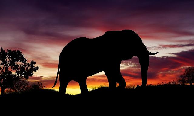 象が進化して象牙をなくして進化⁉︎誤解している進化【n】