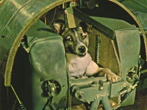 Все о братьях наших меньших: Собаки, которые летали в космос