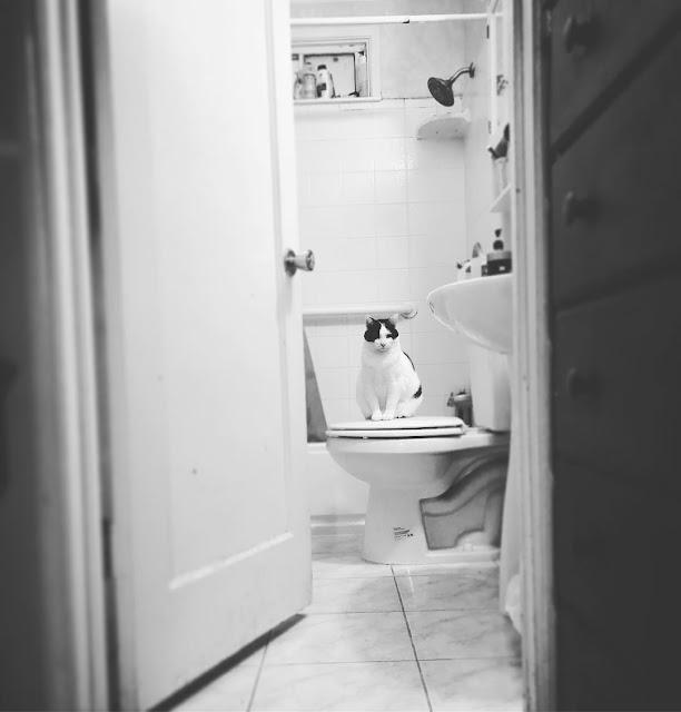 cara-mduah-menghiangkan-kerak-toilet-rumah