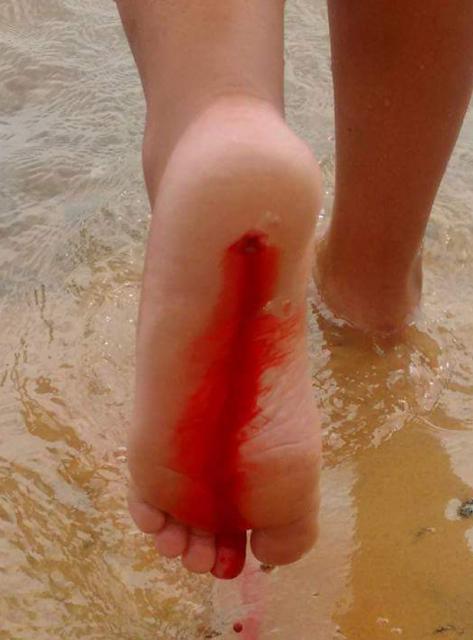Pão de Açúcar/AL,  registra novo ataque de Piranhas em trecho do rio São Francisco