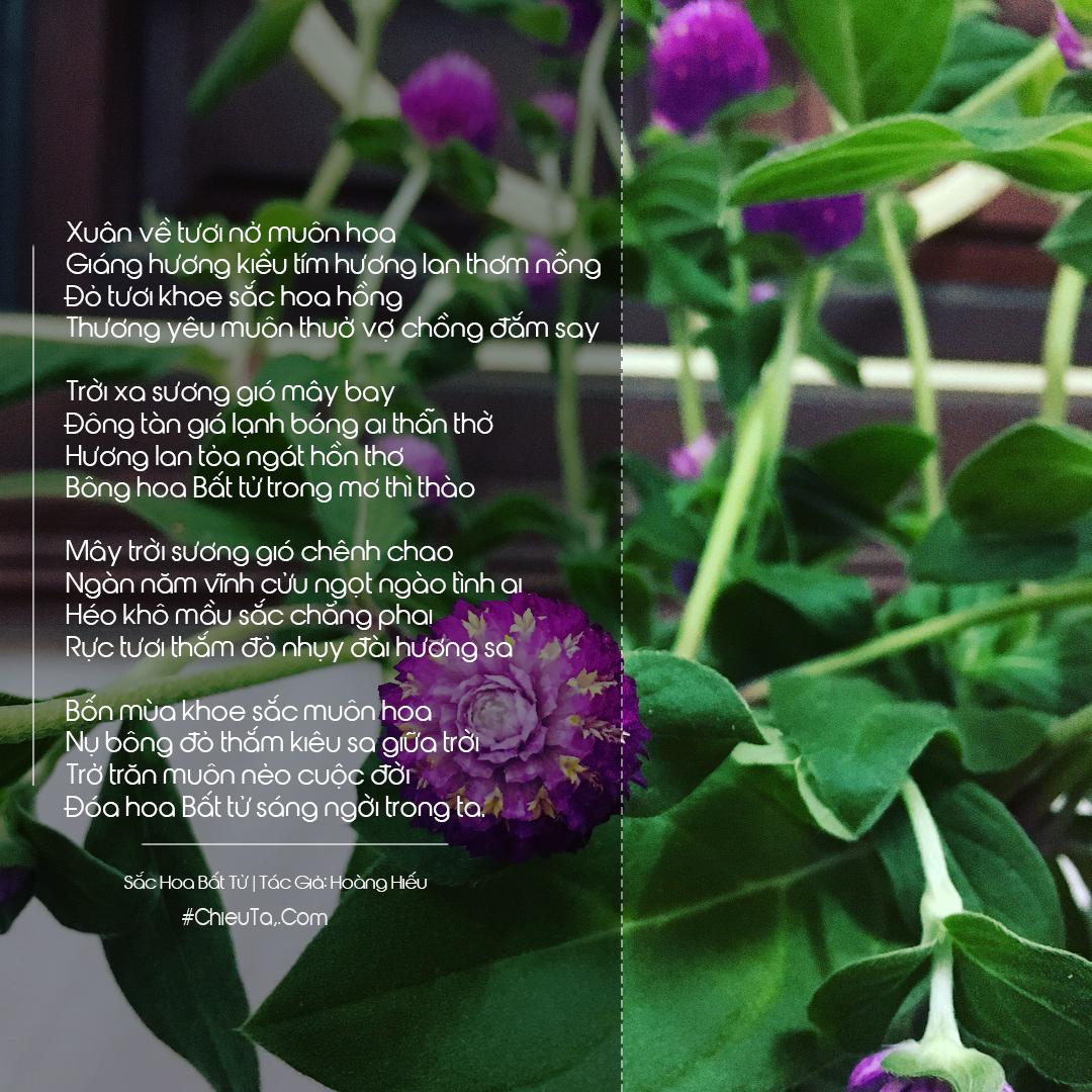 Thơ Hoa Bất Tử - Tuyển Tập 15 Bài Thơ & Câu Thơ Về Loài Hoa Bất Tử