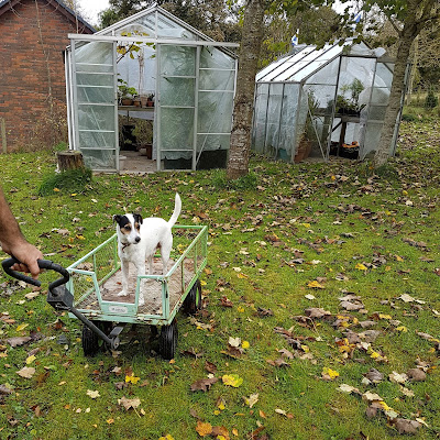 The trolley is for the big pots Bracken not you!