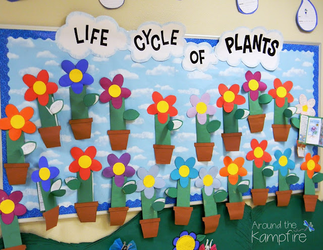 Plant life cycle spring bulletin board with foldable flower booklets.
