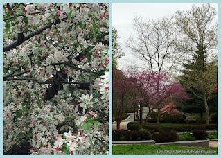 View of Boston's SW Corridor Path in bloom.