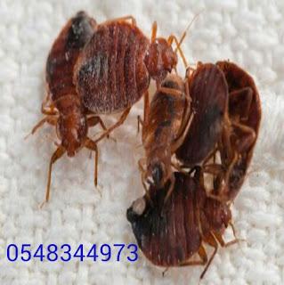 0548344973 Spray cockroaches