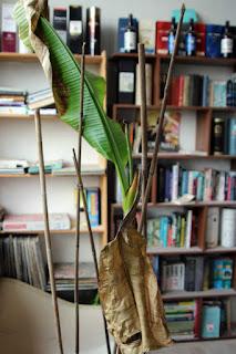 Sad banana plant