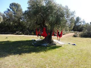 mindfulness, yoga aéreo entre árboles.