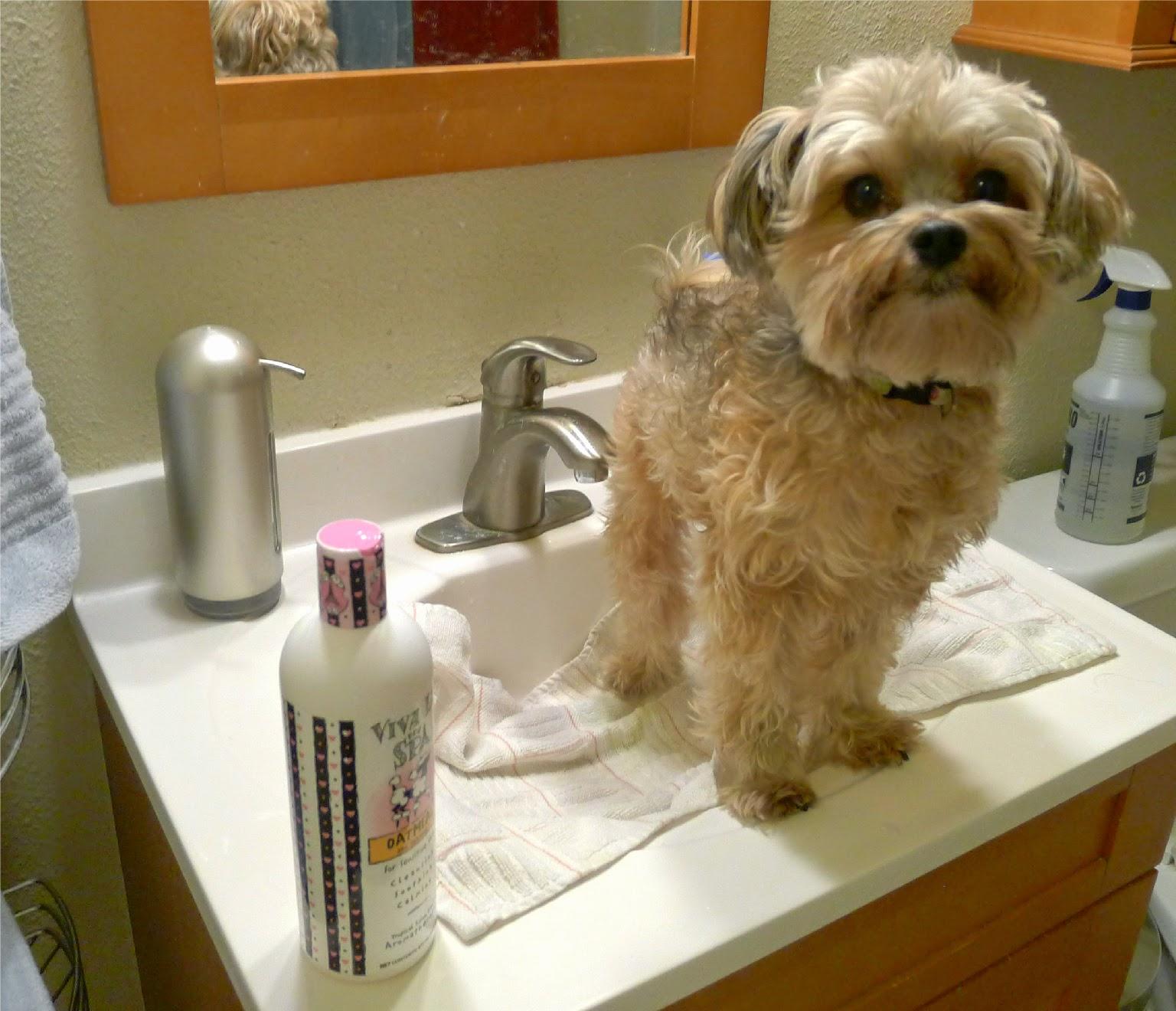 Viva La Dog Oatmeal Shampoo Review Tenacious Little Terrier