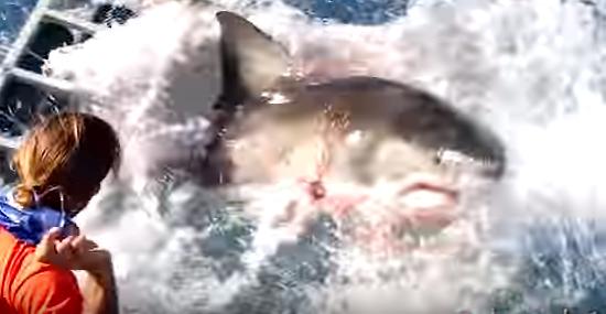 Tubarão-branco invade jaula - e tinha um mergulhador preso lá dentro -  Img 2