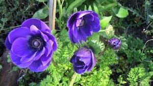 Flores De Sombra Para Interiores