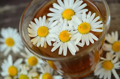 herbal, Manfaat Tanaman Herbal, chamomile, teh chamomile, manfaat chamomile, kandungan gizi chamomile, kegunaan chamomile,