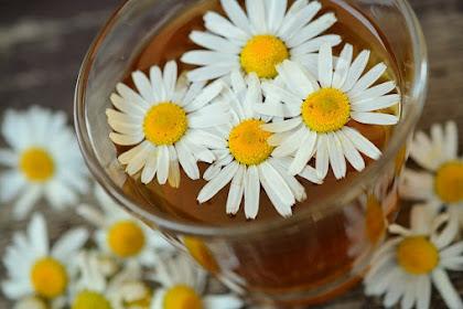 20 Manfaat chamomile bagi kesehatan dan penggunaannya