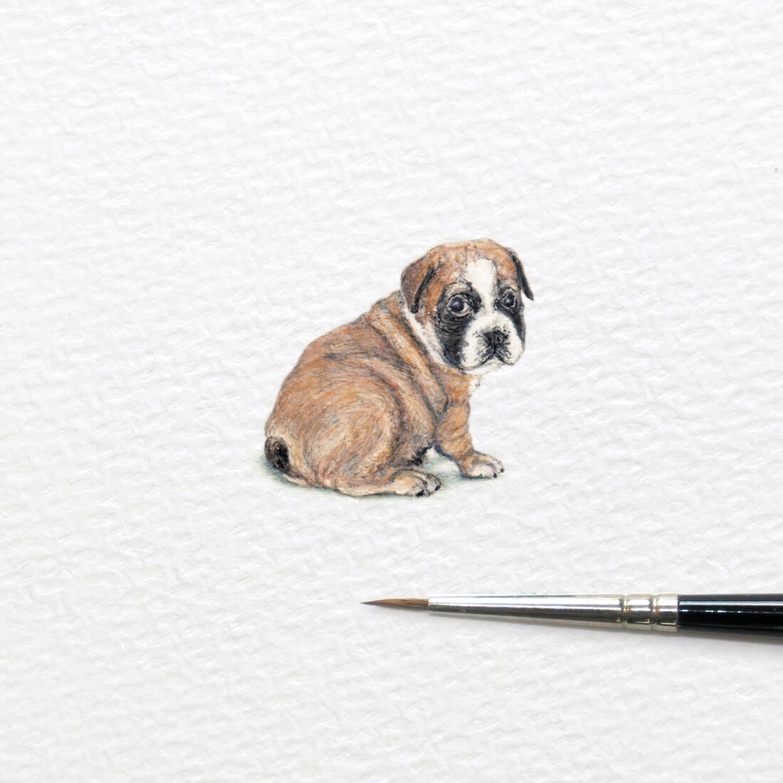 14-Bulldog-Puppy-Frank Holzenburg Miniature Drawings and Paintings of Animals-www-designstack-co
