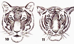 Belajar Melukis Lukisan Naturalisme Menggambar Kepala Harimau