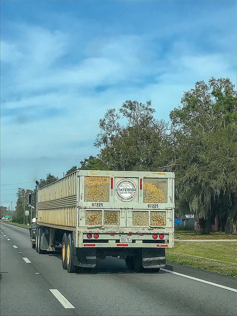Lastbil full med apelsiner