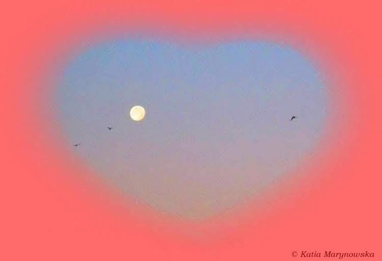 Birds are flying to the moon