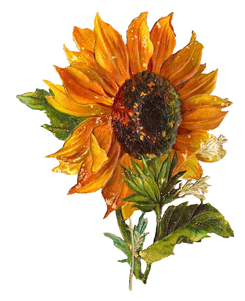 antique digital stock sunflower