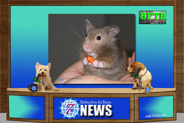 BFTB NETWoof News reports on a hamster with the Berlin police