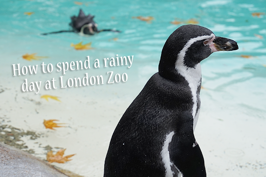How to Spend a Rainy Day at London Zoo