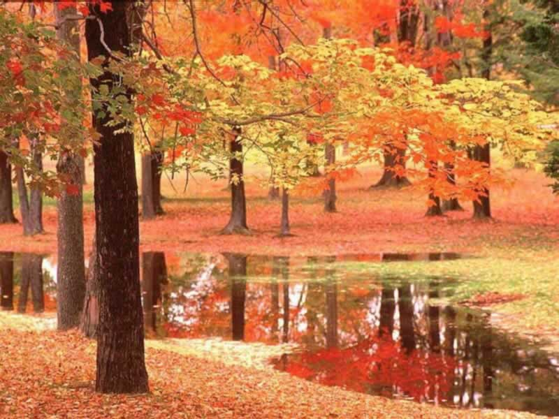 Free Wallpapers Blog Autumn Scene