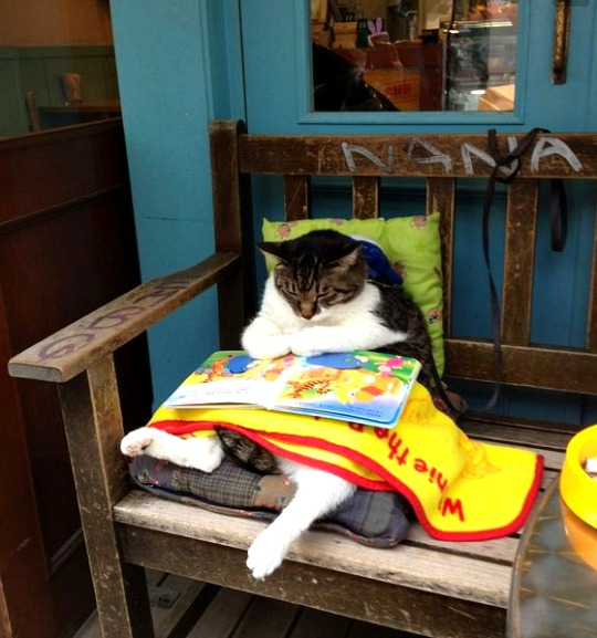 shimokitazawa cat reading a book