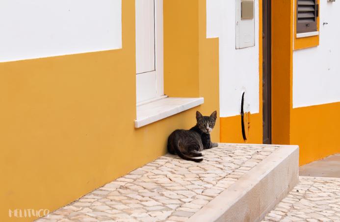 Mejora tus fotografías consejos I gato