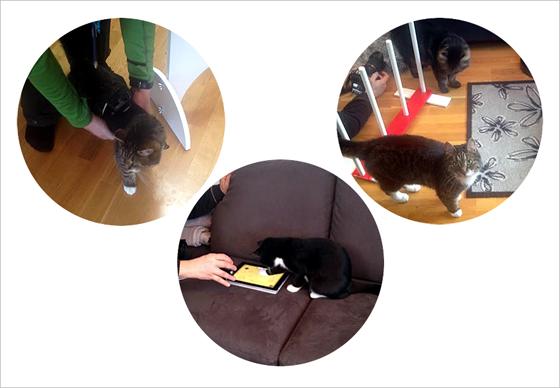 Kolme kuvaa vierekkäin joissa kuvataan kissaa, kiinnitetään go pro -kameraa ja kissa pelaa tabletilla.