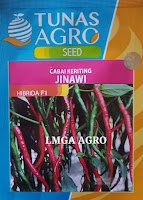 CABAI KERITING JINAWI, CABAI JINAWI, CABAI DJINAWI TUNAS AGRO, LMGA AGRO