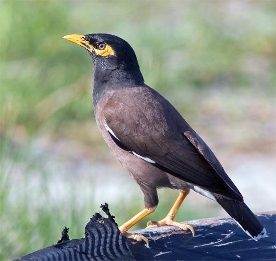 Pictures of Bird - photo#8