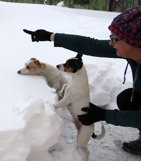 Puppies look out over the snow from ground level